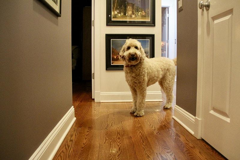 ¿Cómo afecta la vuelta al cole a tu perro?
