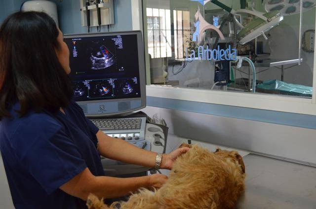Hospital Veterinario 24h en El Puerto de santa maria