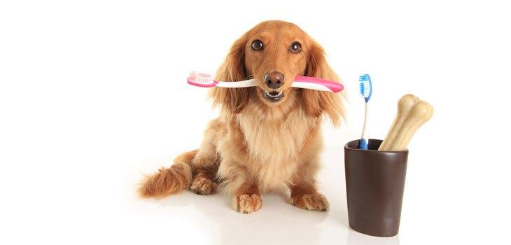Luchar contra la enfermedad periodontal: ¡prevención ante todo!