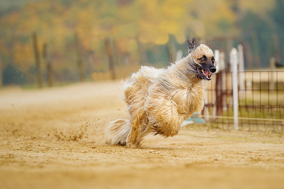Cuidado de perro pelo largo