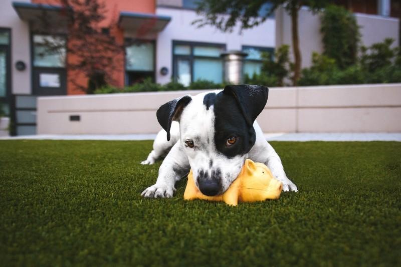 Curso para dueños de cachorros: ¡apúntate a la Puppy Party del Hospital Veterinario La Arboleda!