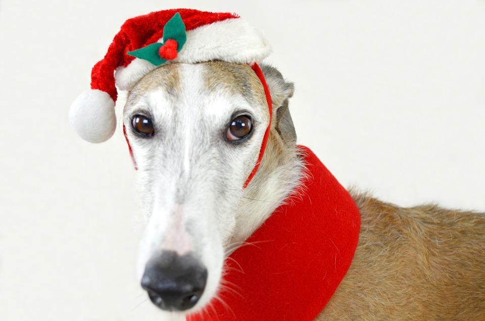 Qué hacer y qué no hacer con tus mascotas esta Navidad