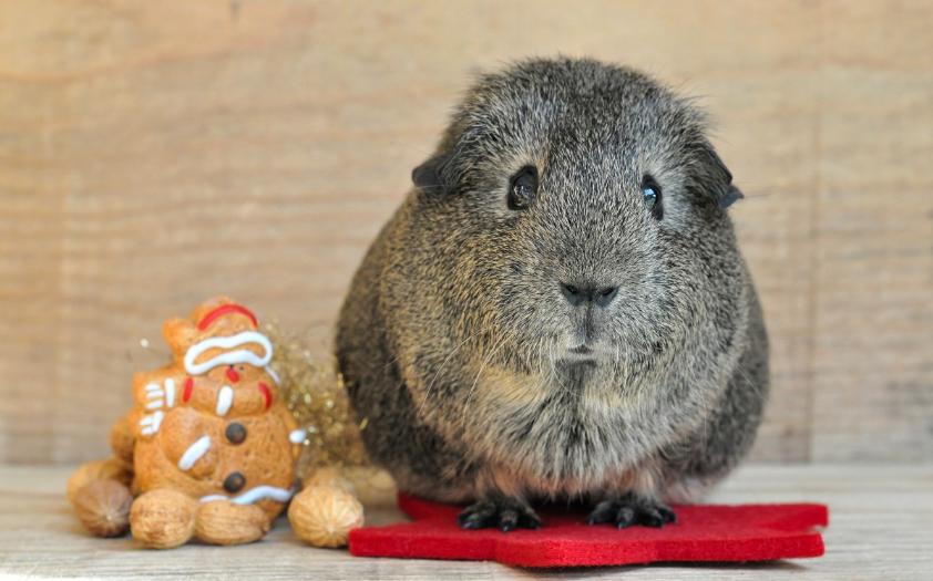 Cuidar las mascotas en Navidad