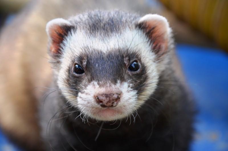 ¿Qué debo saber antes de hacerme con un animal exótico como mascota?