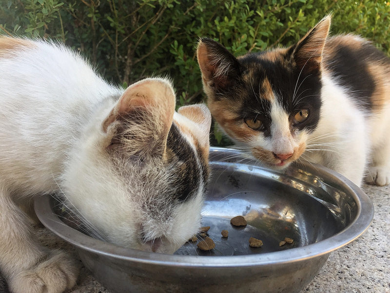 Rompemos los mitos sobre la alimentación de los gatos: ¿cómo alimentar bien a tu mascota?