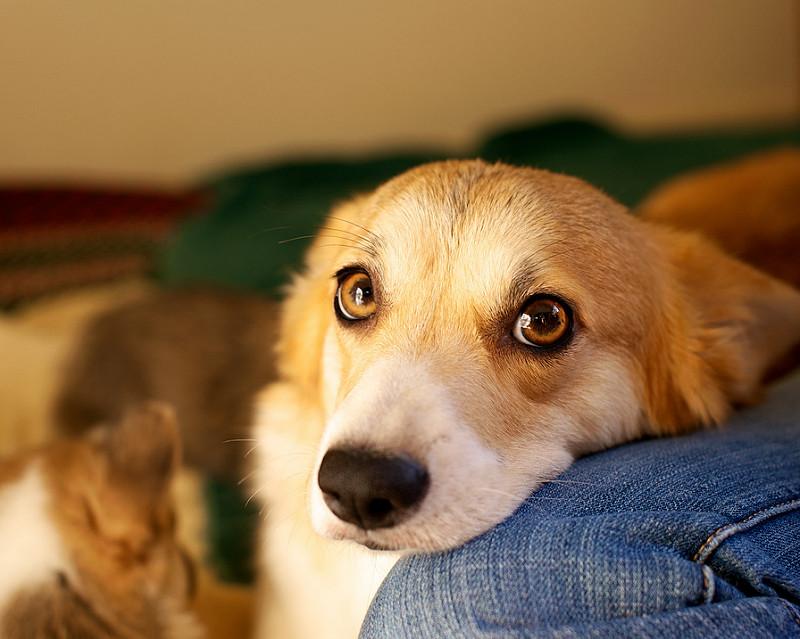 Propósitos de año nuevo para familias con mascotas