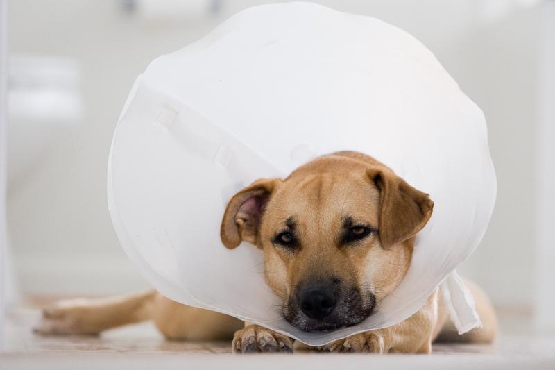 Especial dermatología animal: ¿cuáles son los problemas de piel más frecuentes en nuestras mascotas?