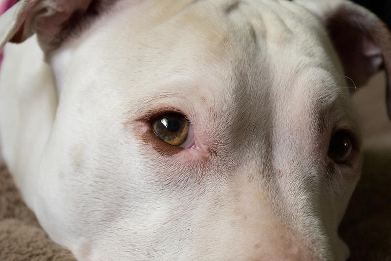 Cuidar de los ojos del perro