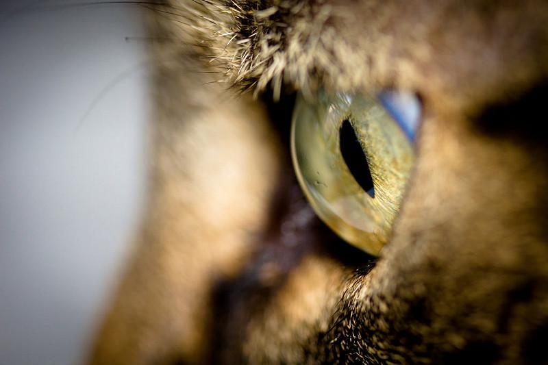 Cuidar bien de los ojos de tu mascota es muy importante: ¿sabes hacerlo bien?