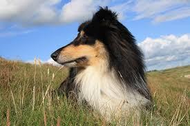 La diabetes en los perros: ¿sabes que tu mascota también puede sufrir esta enfermedad?