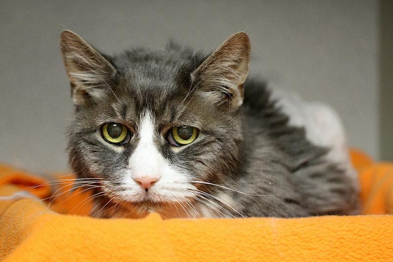¿Tu gato es un abuelete? Todo lo que necesita un gato senior