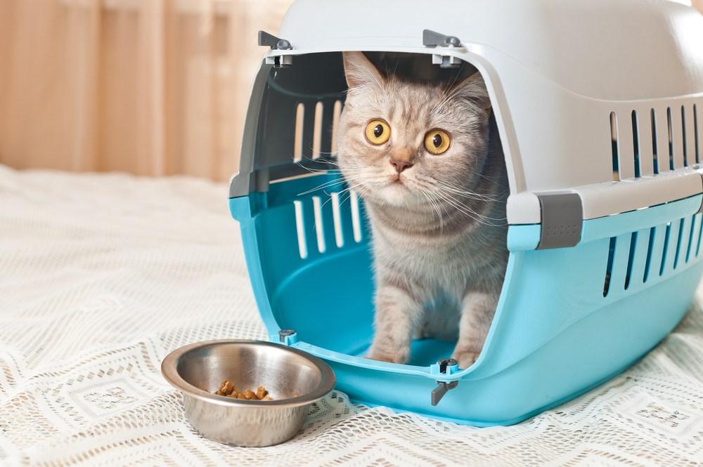 Hospital Veterinario La Arboleda es una Clínica Amable con los Gatos certificada