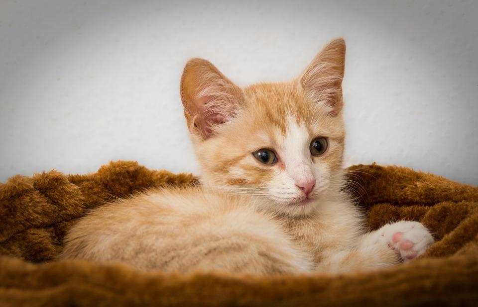 vacunación para gatitos