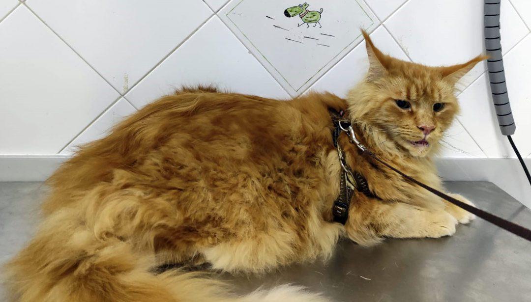 Dermatitis atópica: alergias e hipersensibilidad en mascotas