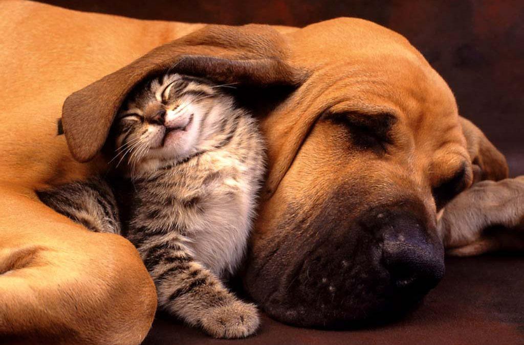 Descubre los beneficios de esterilizar a tu mascota, ¡tiene muchos!