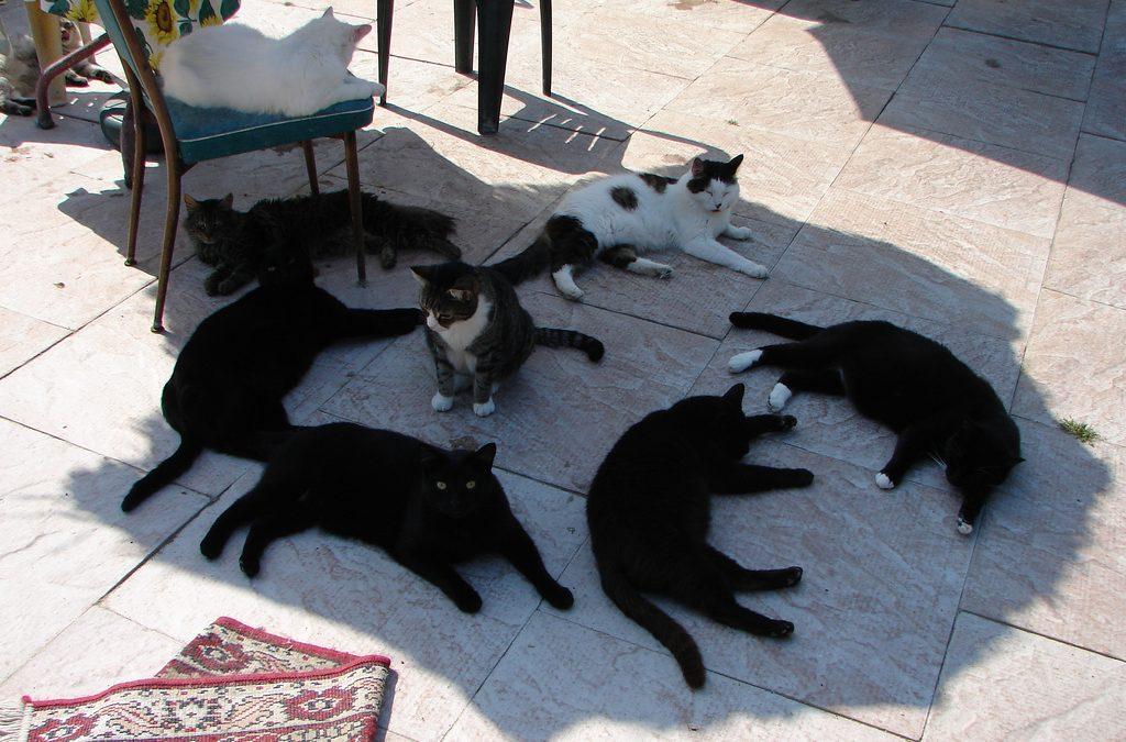 ¿Cómo proteger a mi gato del calor?
