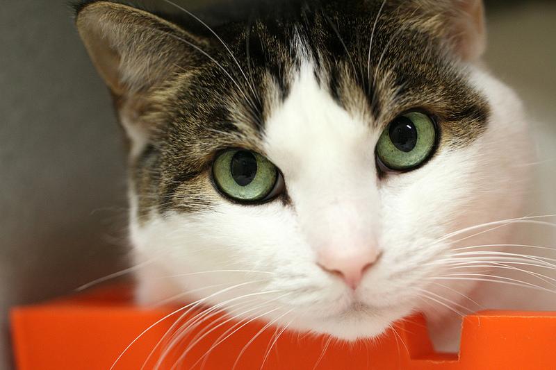 La desparasitación en nuestro gato: Desparasitación externa e interna