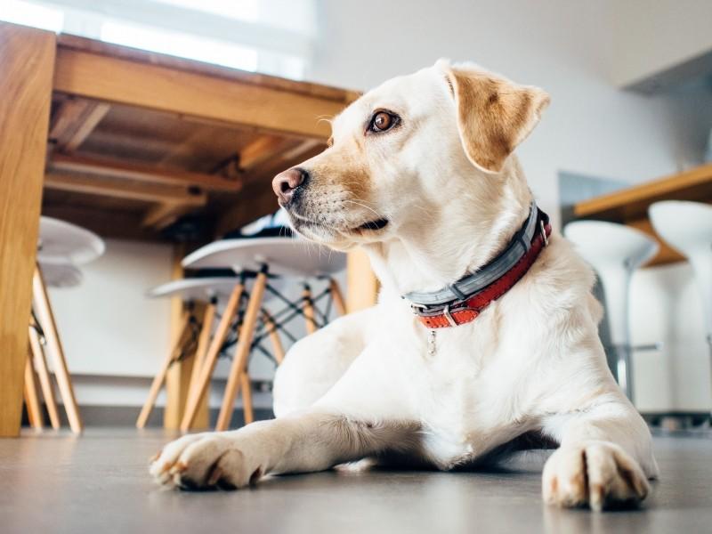 Psicodermatología: trastornos compulsivos caninos