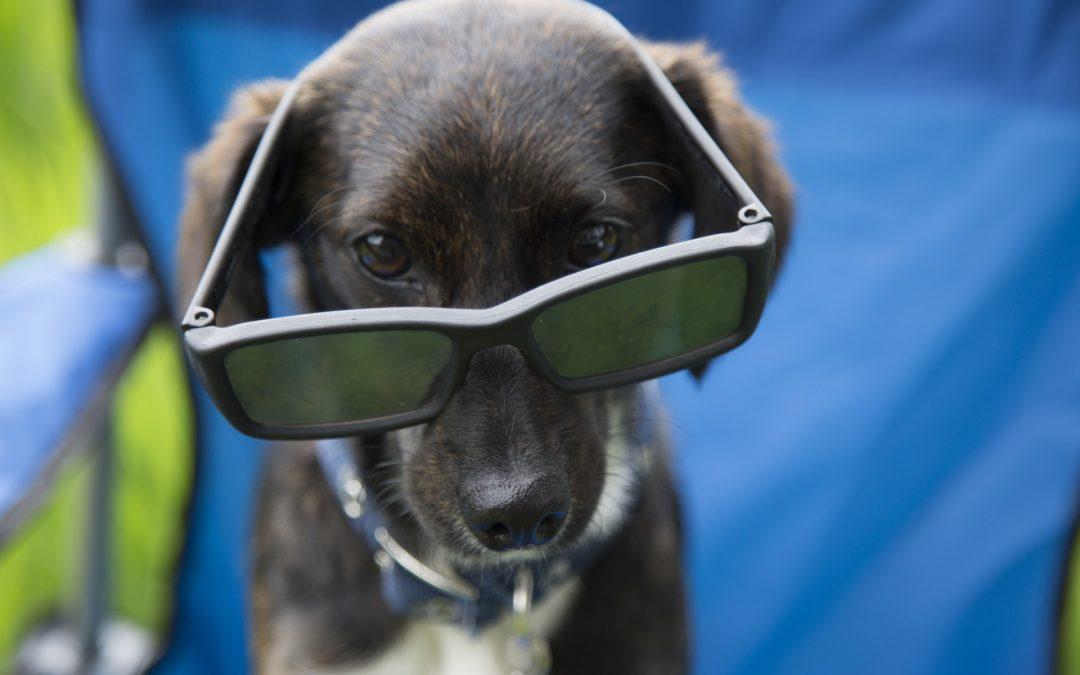 Mascotas en verano: guía para ahorrarte más de un disgusto