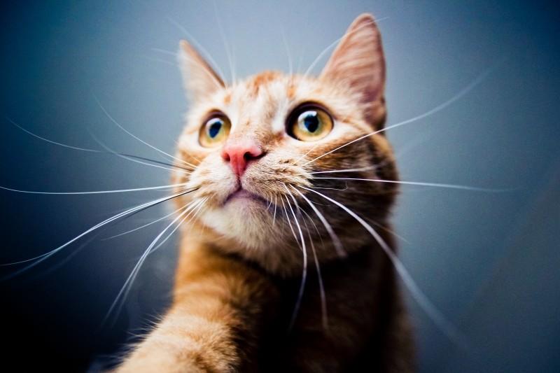 ¿Qué es y cómo se trata la Inmunodeficiencia felina (FIV)?