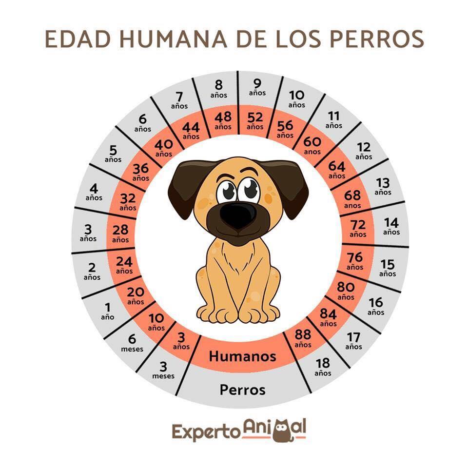 Lo que necesitas saber sobre tu perro hospital veterinario la arboleda
