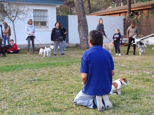 Comportamiento del perro y algunas soluciones a problemas comunes