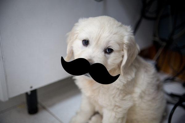 ¿Por qué tienen bigote los perros?