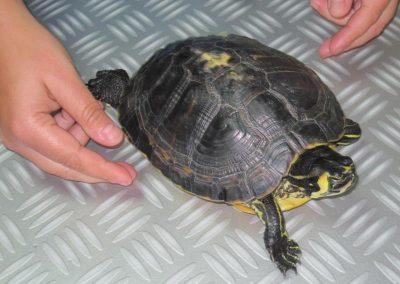15.01.22. Tortuga Florida (1)_Small