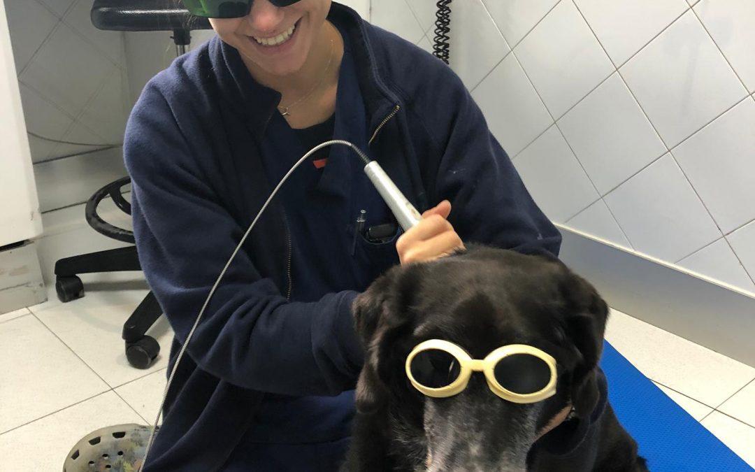 ¡Laserterapia para el cuidado de los más viejitos!