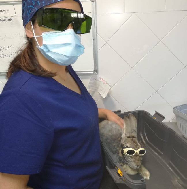 Uso del láser en rehabilitación de exóticos